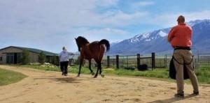 Hobuse hindamine