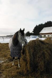 Tekiga hobune
